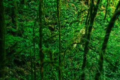 Bakgrund - kall tempererad rainforest fotografering för bildbyråer