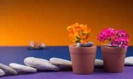 bakgrund kan tömma blomman som blommor växer krukar verkliga två som för en andra kruka bevattnar Arkivbilder