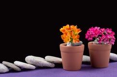 bakgrund kan tömma blomman som blommor växer krukar verkliga två som för en andra kruka bevattnar Royaltyfri Bild