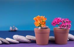 bakgrund kan tömma blomman som blommor växer krukar verkliga två som för en andra kruka bevattnar Royaltyfria Bilder