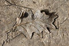 bakgrund lerig fallen leaf Arkivfoton