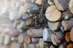 bakgrund loan trä Royaltyfri Foto