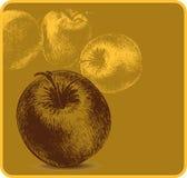Bakgrund med äpplen, hand-teckning. Vektorillus Royaltyfri Bild