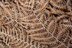 Bakgrund med abstrakta modeller av gammalt torkar sidor Textur av det naturliga bladet i skog Royaltyfria Bilder