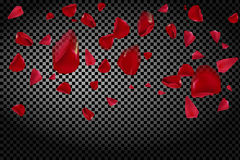 Bakgrund med att flyga röda roskronblad på en genomskinlig bakgrund Royaltyfria Foton