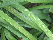 Bakgrund med bilden av ett vått blad Arkivbild