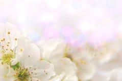 Bakgrund med blommor Royaltyfria Foton