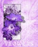 Bakgrund med blommor 211 Royaltyfria Foton