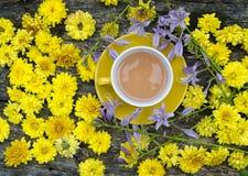 Bakgrund med blommor av gula krysantemum Arkivfoto