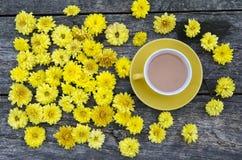 Bakgrund med blommor av gula krysantemum Fotografering för Bildbyråer