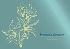 Bakgrund med delikata m?lade blommor Vykort textram V?rkonturblommor, vattenf?rg ocks? vektor f?r coreldrawillustration royaltyfri illustrationer