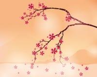 Bakgrund med den körsbärsröda blomningen Arkivfoton
