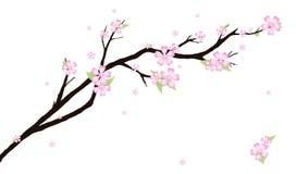 Bakgrund med den stiliserade körsbärsröda blomningen Royaltyfri Fotografi