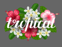 Bakgrund med den tropiska blommahibiskusen och plumeria Avbilda för design på t-skjortor, tryck, inbjudningar som hälsar Fotografering för Bildbyråer