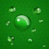 Bakgrund med droppar på det gröna bladet Royaltyfri Foto