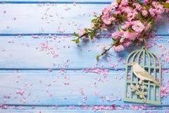 Bakgrund med eleganta rosa färger blommar på blåa träplankor Fotografering för Bildbyråer