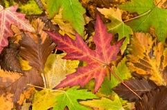 Bakgrund med fallande leaves Royaltyfria Foton