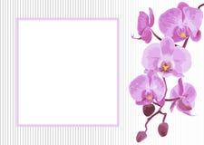 Bakgrund med filialorkidén Royaltyfri Foto