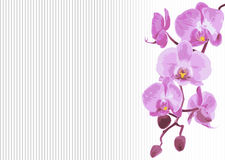 Bakgrund med filialorkidén Royaltyfria Bilder