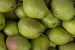 Bakgrund med grön päronfrukt som är fullvuxen i vändkretsar, bildbruk för design, advertizing, marknadsföring, affär och printing arkivfoton