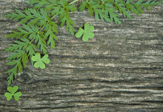 Bakgrund med grönt gräs Royaltyfri Foto