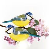 Bakgrund med gulliga par för vektor av fåglar stock illustrationer
