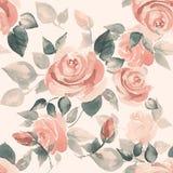 Bakgrund med härliga rosor 5 Arkivbilder