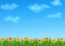 Bakgrund med himmel, moln, gräs, gerbera blommar Fotografering för Bildbyråer