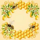 Bakgrund med honungskakan Arkivbilder