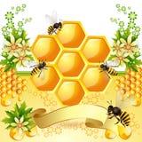 Bakgrund med honungskakan Fotografering för Bildbyråer