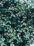 Bakgrund med mogna röda äpplen på ett träd apples crate organic Arbeta i trädgården och skörda begrepp royaltyfri fotografi