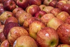 Bakgrund med nya röda äpplen Arkivfoto