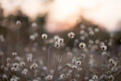 Bakgrund med ogräs och magi av ljus på skymning i hösten Solnedgång arkivbilder