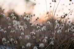 Bakgrund med ogräs och magi av ljus på skymning i hösten Solnedgång arkivbild