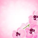 Bakgrund med orkidén Arkivbild