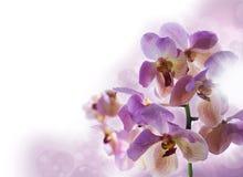 Bakgrund med orkidér royaltyfri bild