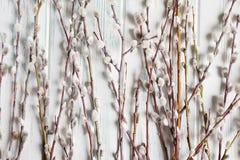 Bakgrund med pilfilialer och knoppar Vårbaner med pilfilialer Lyckönsknings- vårbakgrund med pilen arkivbild