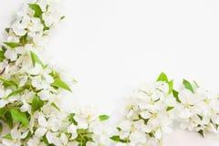 Bakgrund med sprigsna av blomning Royaltyfria Bilder