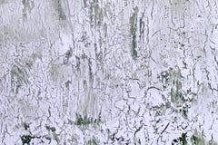 Bakgrund med sprucken blek lila målarfärg Textur av den gamla grova beläggningen En vägg med en ovanlig abstrakt modell Fotografering för Bildbyråer