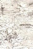 Bakgrund med sprucken ljus vit målarfärg Textur av den gamla grova beläggningen En vägg med en ovanlig abstrakt modell Arkivfoton