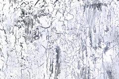 Bakgrund med sprucket vit och mörker - blå målarfärg Textur av den gamla grova beläggningen En vägg med ett ovanligt, abstrakt be Royaltyfri Bild