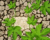 bakgrund med stoneworken, en krypa växt stock illustrationer