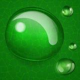 Bakgrund med stora och små droppar på det gröna bladet Royaltyfria Bilder