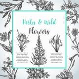 Bakgrund med tappningsamlingen för hand drog örter och för lösa blommor av för inbjudanvektor för växter blom- illustrationer in vektor illustrationer
