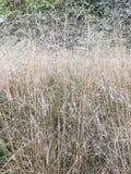 Bakgrund med torrt gräs i höst Royaltyfria Foton