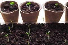 Bakgrund med torvkrukor och jordningen Vår som planterar arbete arkivfoton