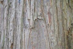 Bakgrund med trädskället Royaltyfria Bilder