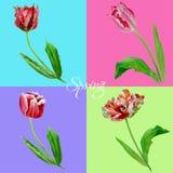 Bakgrund med tulips3-02 Arkivfoto
