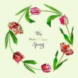 Bakgrund med tulips4-02 Arkivbilder