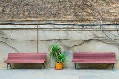 Bakgrund med två bänkar, mellan som växten, i bakgrunden en tegelstenvägg med vårloachen i dag Royaltyfri Fotografi